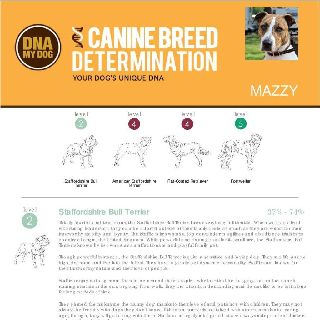 Dog Breed Test Uk