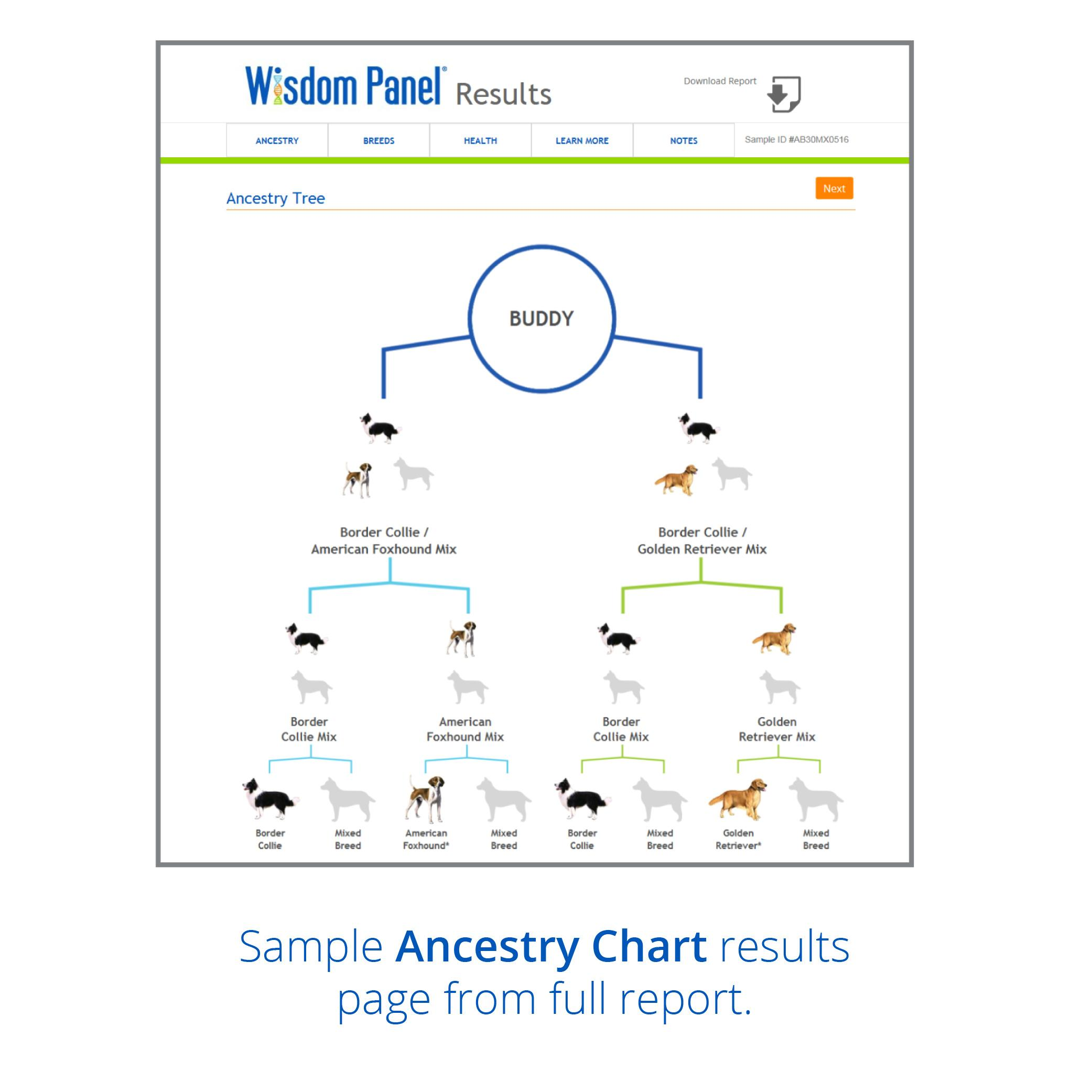 Wisdom Panel Dog Breed DNA Test Sample Ancestry Chart
